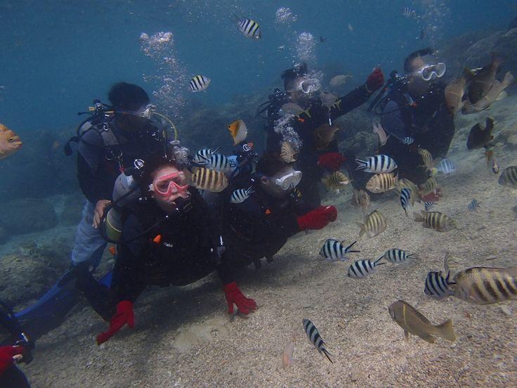 綺麗なサンゴ礁に大興奮!! - http://www.natural-blue.net/blog/info_9451.html