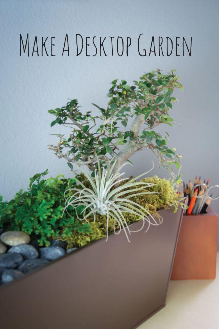 permabak voor scholen/kantoren? DIY Desktop Garden --> http://www.hgtvgardens.com/decorating/make-a-desk-garden-oasis?soc=pinterest