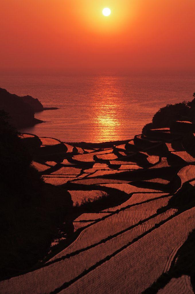 Sunset in terraced rice fields, Hamanoura, Genkai-cho, Saga, Japan