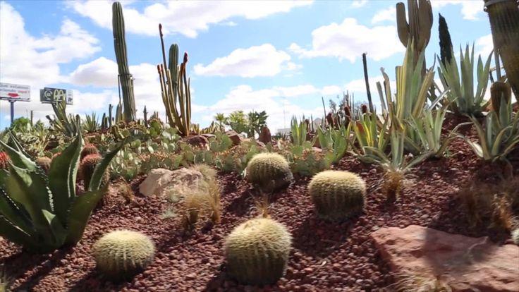 Desert city exposicion cactus y suculentas acua madrid for Jardin cactus madrid