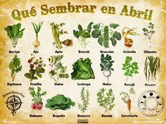 Les traemos este útil calendario de las Siembras del mes de Abril, además de fichas con información específica de cada planta que podr... #siembra
