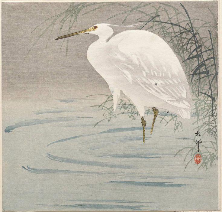 Ohara Koson  -  Snowy heron standing beside reeds in water