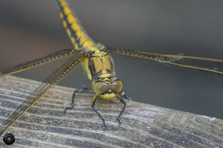 Dragonfly by Marco Houben on 500px