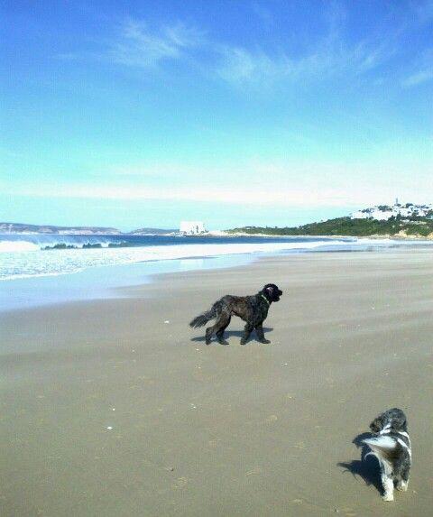 Hercule and Zeb, enjoying Lookout Beach