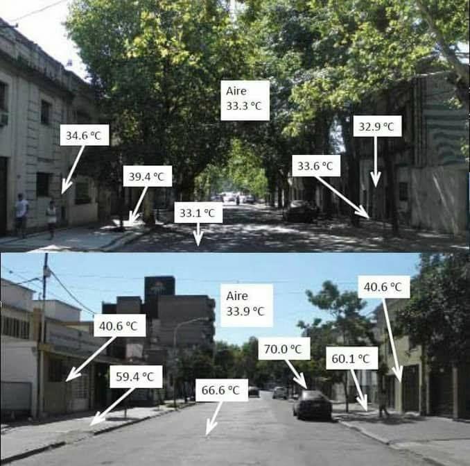 Ağaçların şehirdeki hava sıcaklığına etkisi