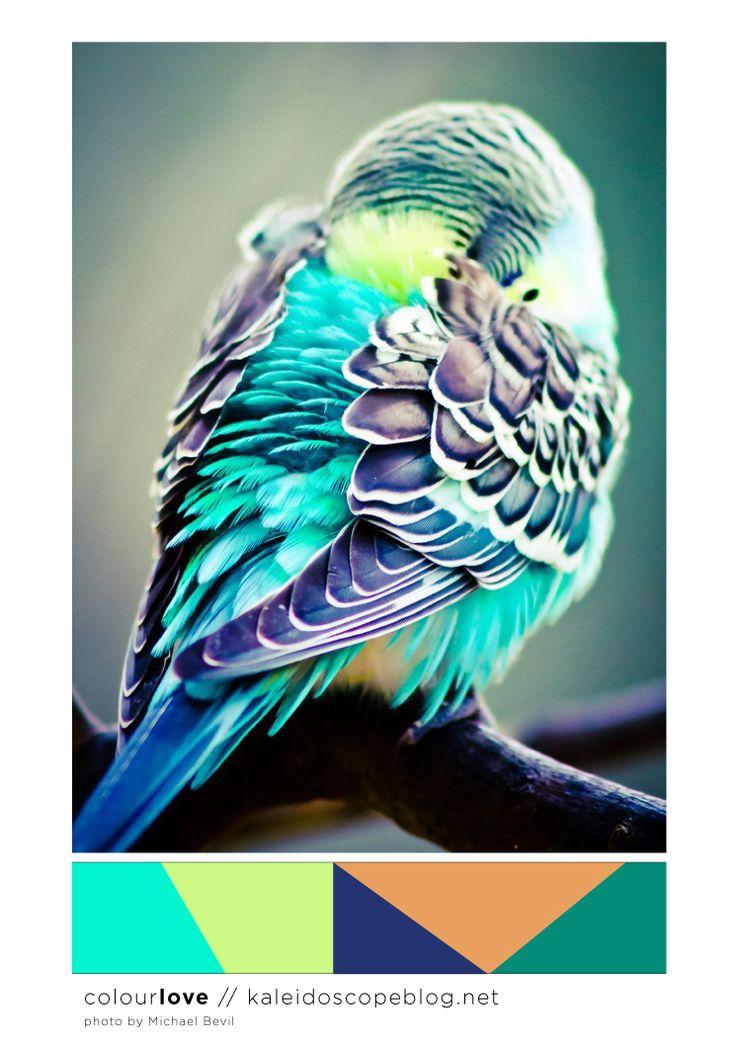 Colour Love // 77 - colour palette, color, green, yellow, blue, orange, bright, neon, fluro, bird