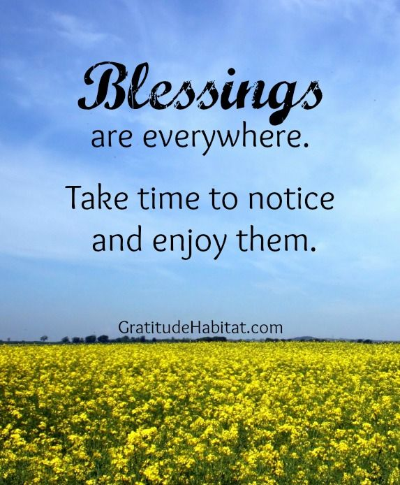 Blessings are everywhere. #blessings #gratitude-quote <3 Visit us at: www.GratitudeHabitat.com