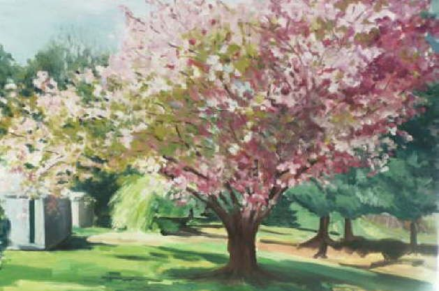 Cherry Bossoms, This floral oil painting depicts a beautiful cherry blossom tree in full bloom. Painted on canvas, this painting is available in print.