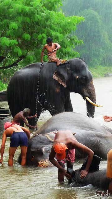 Washing Elephants - Kerala, India by Mélimélopée, via Flickr