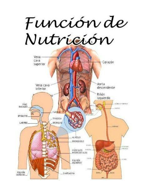 Función de nutrición é o conxunto de procesos mediante os cales os seres vivos obteñen materia e enerxía para poder realizar o resto das funcións vitais. Distínguense 2 tipos de seres vivos: *Autótrofos e Heterótrofos. #Earth #cells #water...