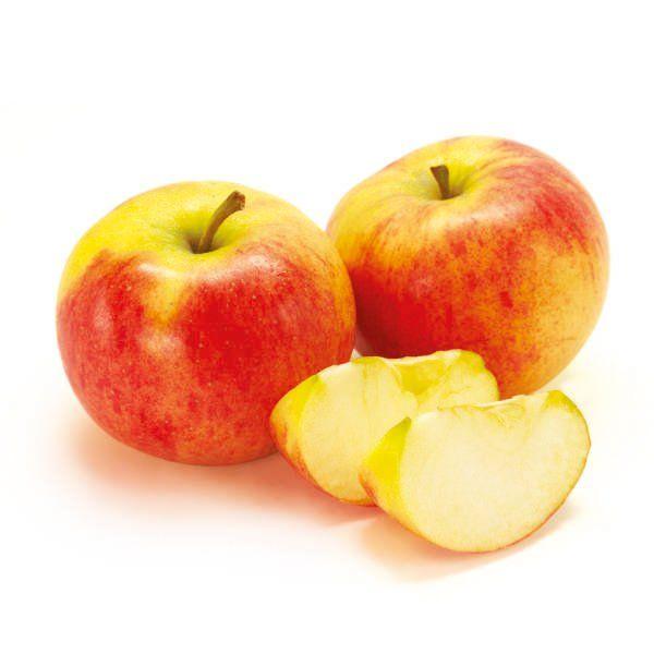 Jabłoń - Malus domestica 'Koksa Pomarańczowa'