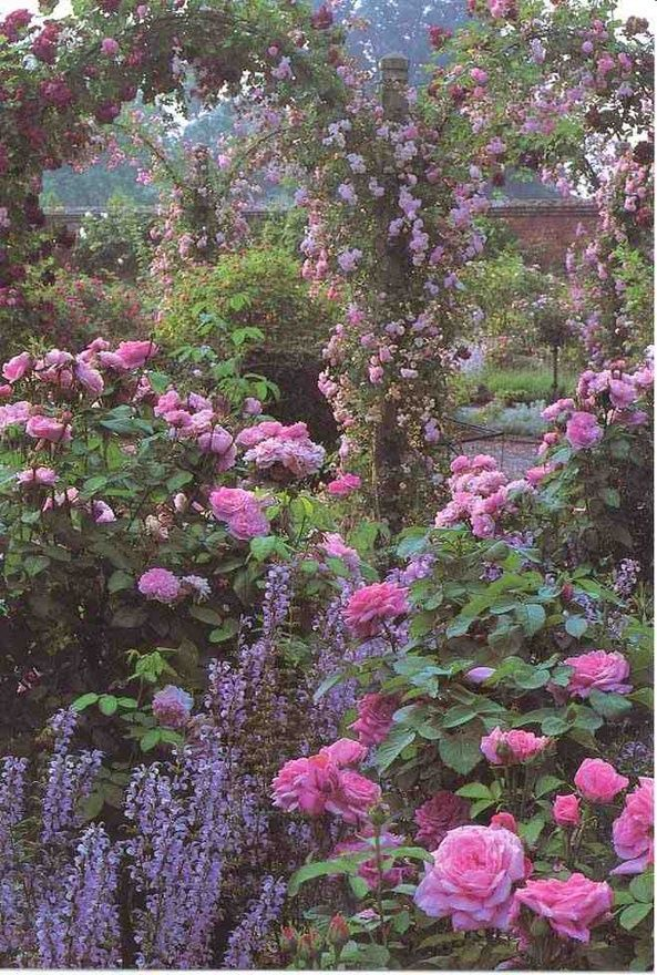 Backyard Covered with Rose Gardens