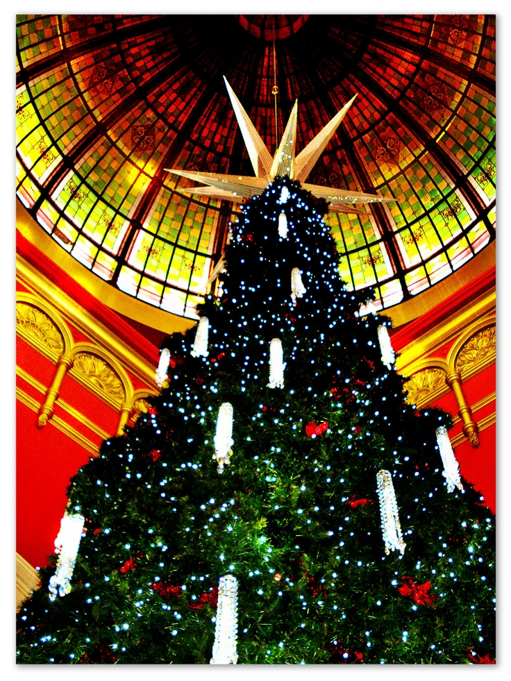 Christmas Tree 12/12 @ Queen Victoria Building.
