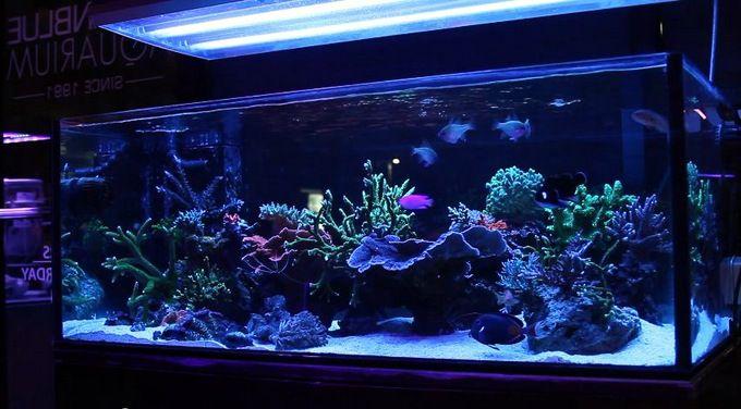 Ocean Blue Aquarium S 90 Gallon Reef Is A Display Worthy