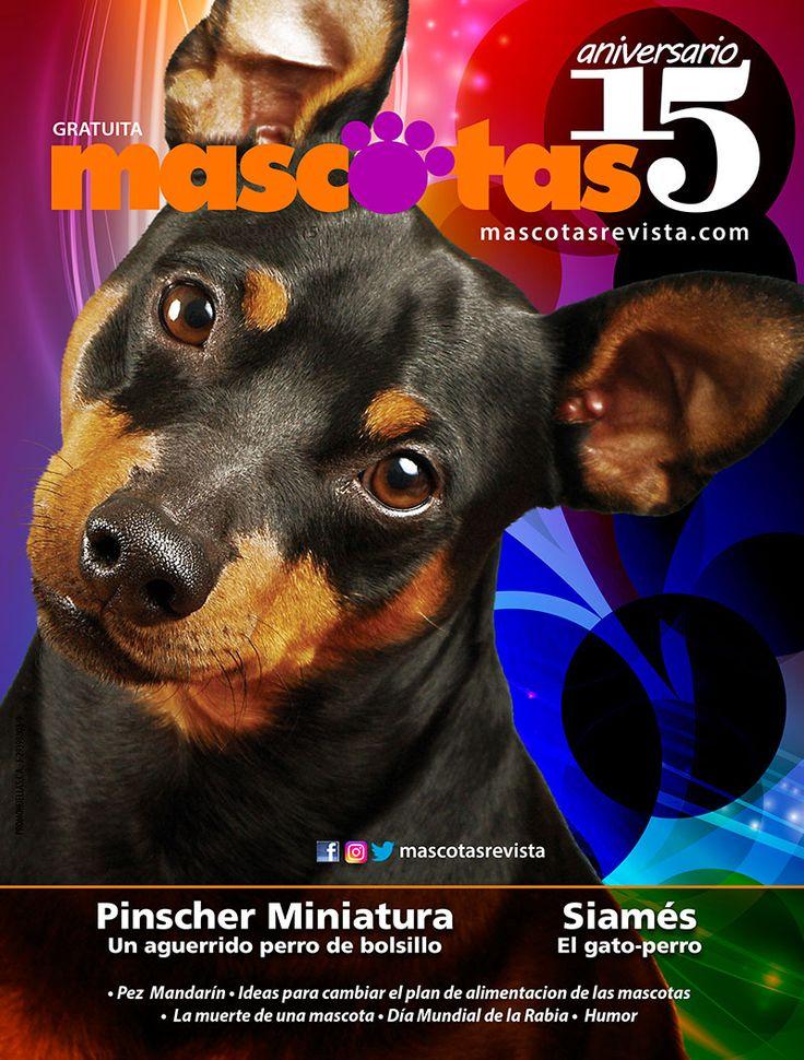 Pinscher Miniatura - Mascotas Revista 83
