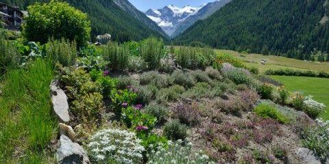 Panoramica completa delle tecniche, piante, piate, trucchi e segreti per creare un giardino roccioso fai da te da fare invidia a quelli alpini più rinomati.