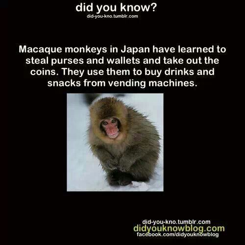 Best Ooh Ooh Aah Aah Images On Pinterest Animal Kingdom - Monkey knows how to operate vending machine