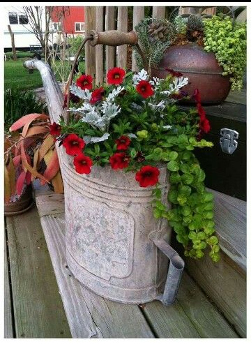 vintage galvanized watering can with plants inside