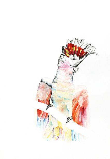 Bird of Colour.