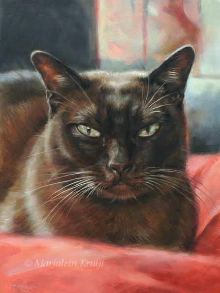 Burmese cat portrait in commissionair by Marjolein Kruijt www.marjoleinkruijt.nl #catart #petportraits