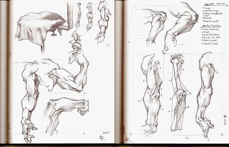 renaissance drawings essay
