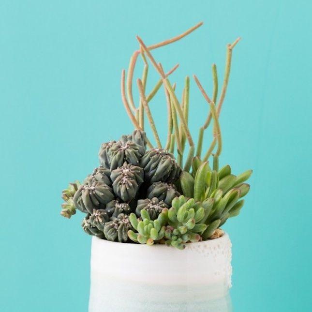 2022 Best Garden And Indoor Plants Ideas Images On