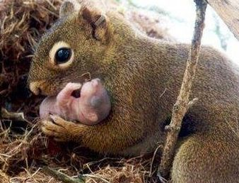 Mom and baby Squirrel