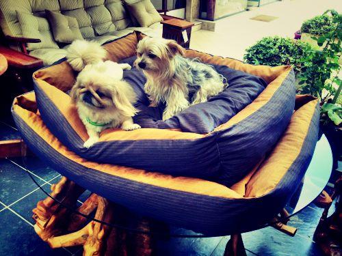80 X 110 cm  Köpek Yatağı Köpek Minderi MUSTARD DOG BED - KÖPEK YATAKLARI Hardal Rengi Köpek Minderi - Köpek Yatakları http://kemique.com/page.php?id=28