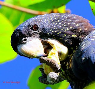 Passion for nature, wildlife, Photography.: Parrots in our back yard.