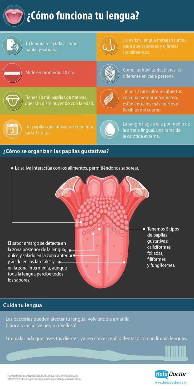 ¿Como funciona tu lengua? #lengua #curisidades