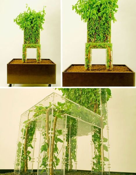 """Growing Chair by Michel Bussien  Raised on a growing platform like an elvish throne, Michel Bussien's 'Growing Chair' helps us get back to our roots with a clear polycarbonate frame that is filled with greenery as the plant inside grows. The artist says """"To move further we need to incorporate the living matter that surrounds us. Let us use the complexity of living nature and include it in our creations. These creations will then redefine the way we reconstruct nature."""""""