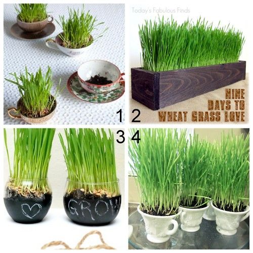 DIY Wheat Grass Planters - love the chalk board planters