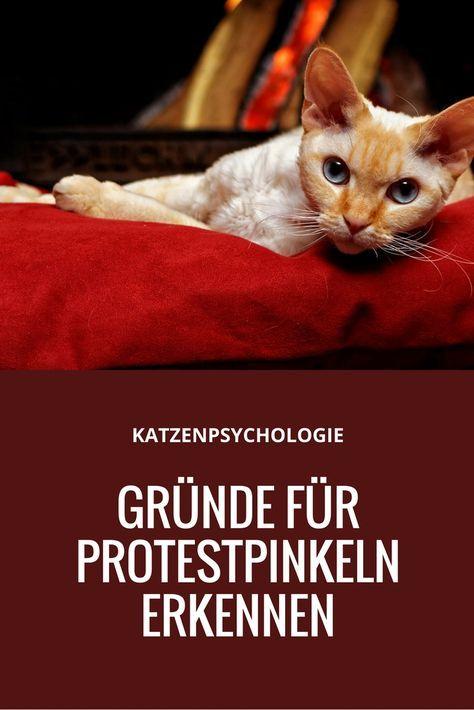 Katzenpsychologie: Gründe für Protestpinkeln erkennen