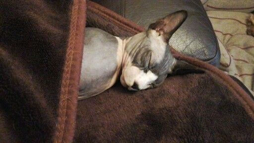 Sleeping beauty but naughty!
