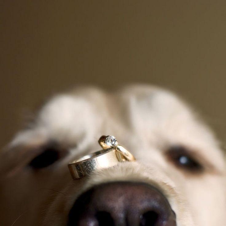 Woo Haneul ★ Pew Pew (ce titre est perf, merci Min Hyuk) 3d6db8648f0e0b4ec679969994f71e57--wedding-dogs-wedding-stuff