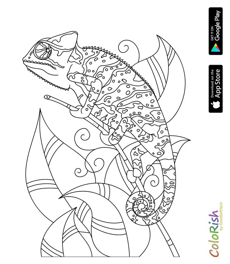 340 best coloring reptile images on Pinterest Doodle
