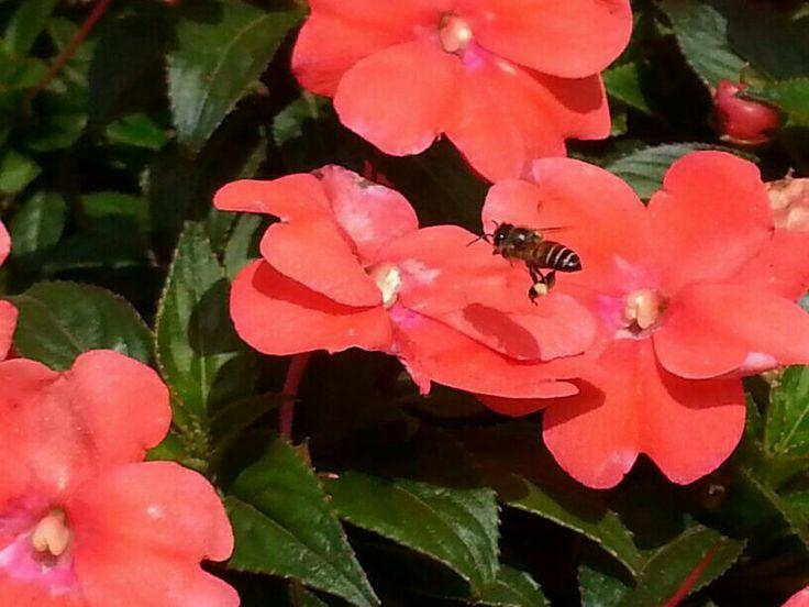 This is one of my perfect shot! HoneyBee n Flower