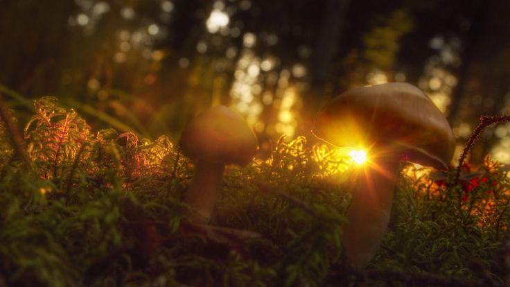 mushroom image: High Definition Backgrounds, 2000x1125 (213 kB)