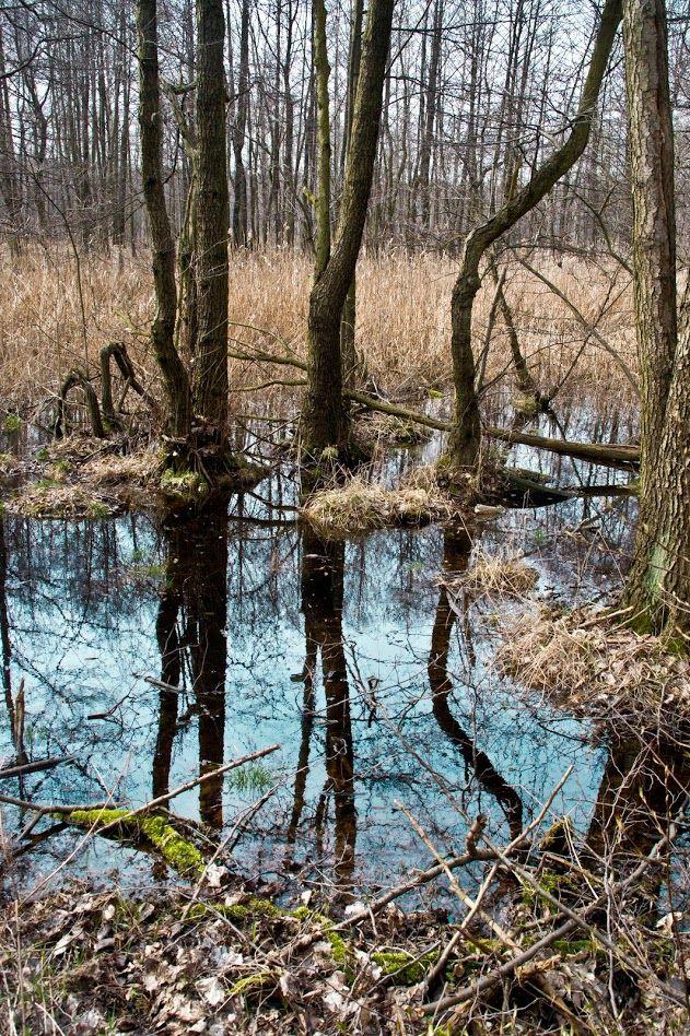 Katowice - Poland  #Katowice #Nikiszowiec #Poland #marshland #MysteriousForest #swamp