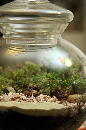 Twig terrariums. Like this :)