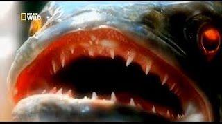 Смотреть онлайн видео Nat Geo Wild: Змееголовый монстр / Речные монстры