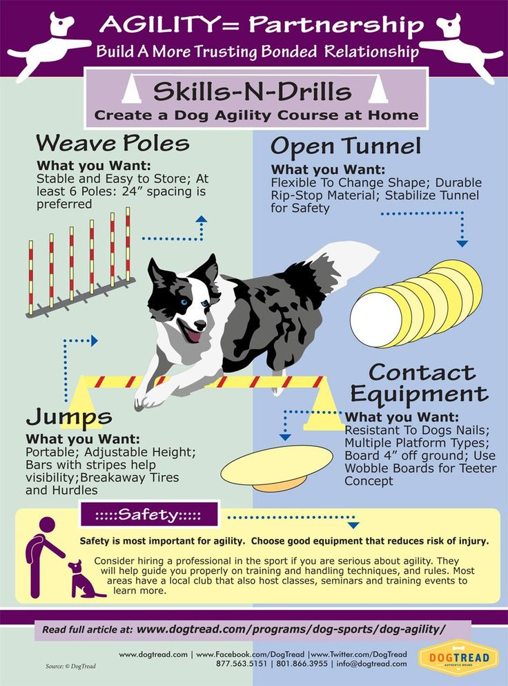 AGILITY= Partnership - Build A More Trusting Bonded  Relationship with Your Dog