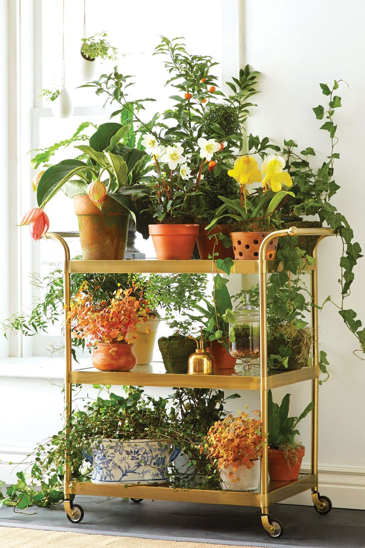 "Garden Variety ""No space for a greenhouse or garden? You can fill up a vintage or new bar cart with tons of spring pots and trailing plants. It adds great color and texture to any corner."" —Susan  Lolita Bar Cart, $599, onekingslane.com."