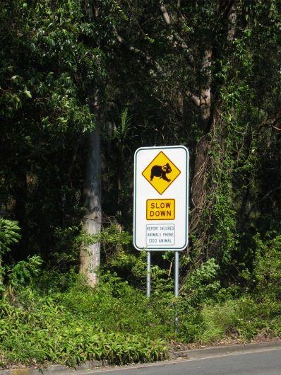 Koalas Crossing Sign, Burleigh Heads National Park, Fleays Wildlife Park, Australia