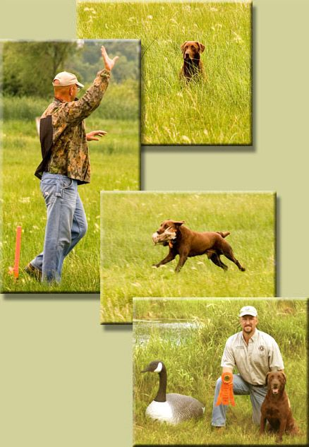 Dog training hand signals, a different type of communication