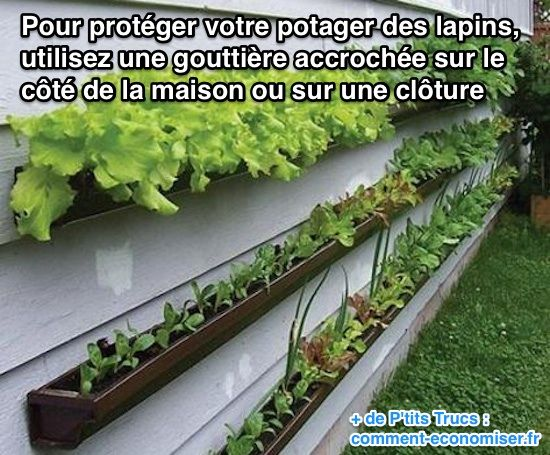 186 best images about plantes et jardinage on pinterest - Comment faire venir un herisson dans son jardin ...