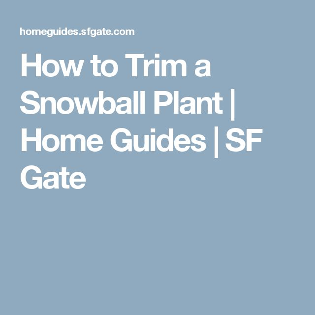 How to Trim a Snowball Plant | Home Guides | SF Gate