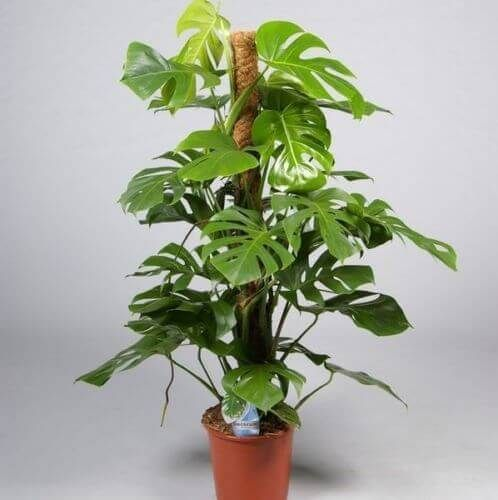 Good Balcony Plants