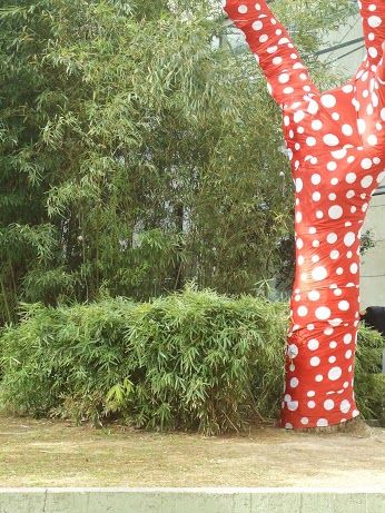 Jacaranda vestido de Obsesión Infinita al pie un seta de cañas indias podadas