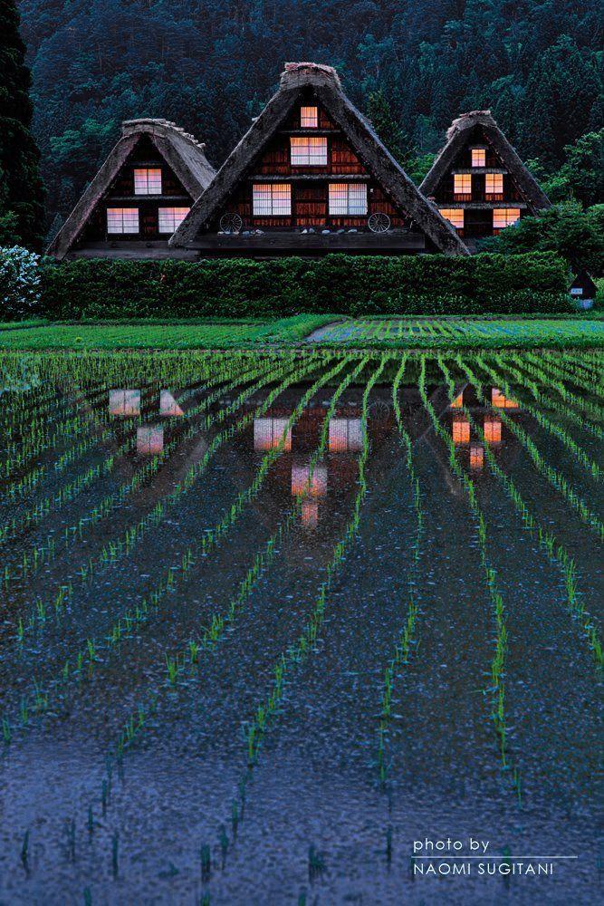 thekimonogallery: Shirakawa, Gifu, Japan | Naomi Sugitani 白川村